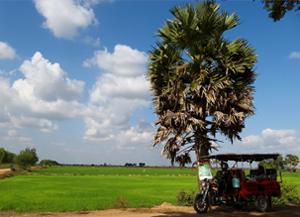 battambang-riziere