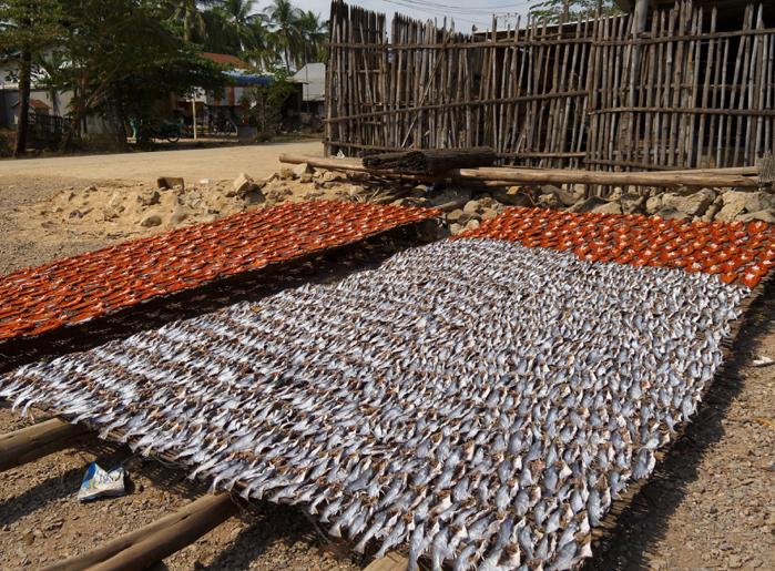 cambodge-battambang-poissons