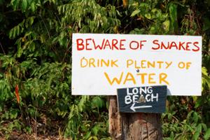 Cambodge-Koh-Rong-Island-snakes