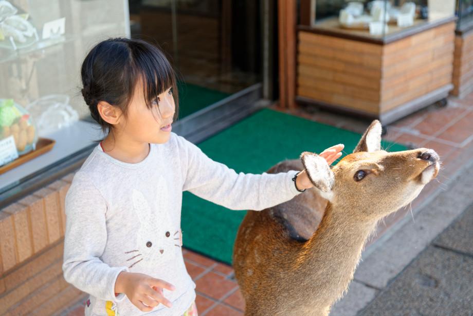 Cerf japonais Miyajima