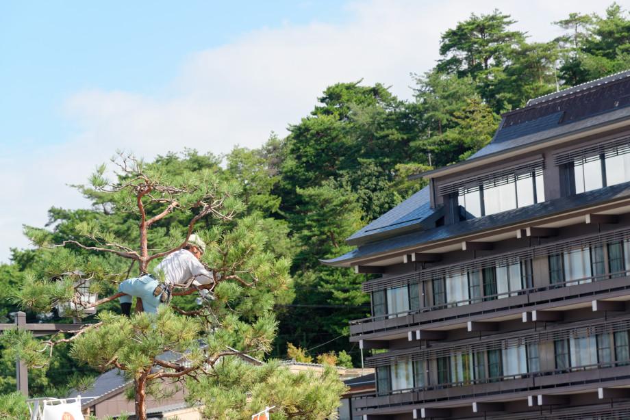 Jardinier de Miyajima