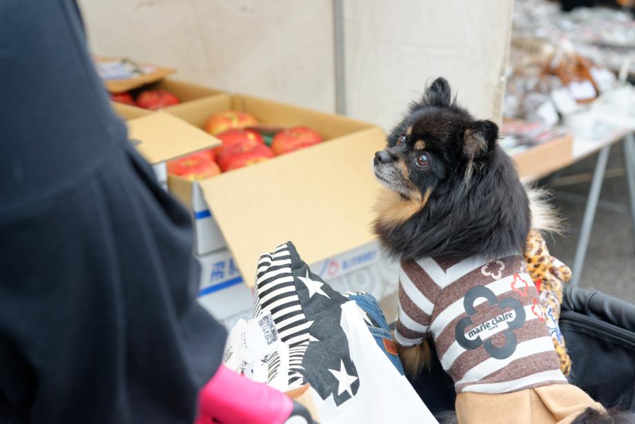Petit chien au marché Jinya-mae