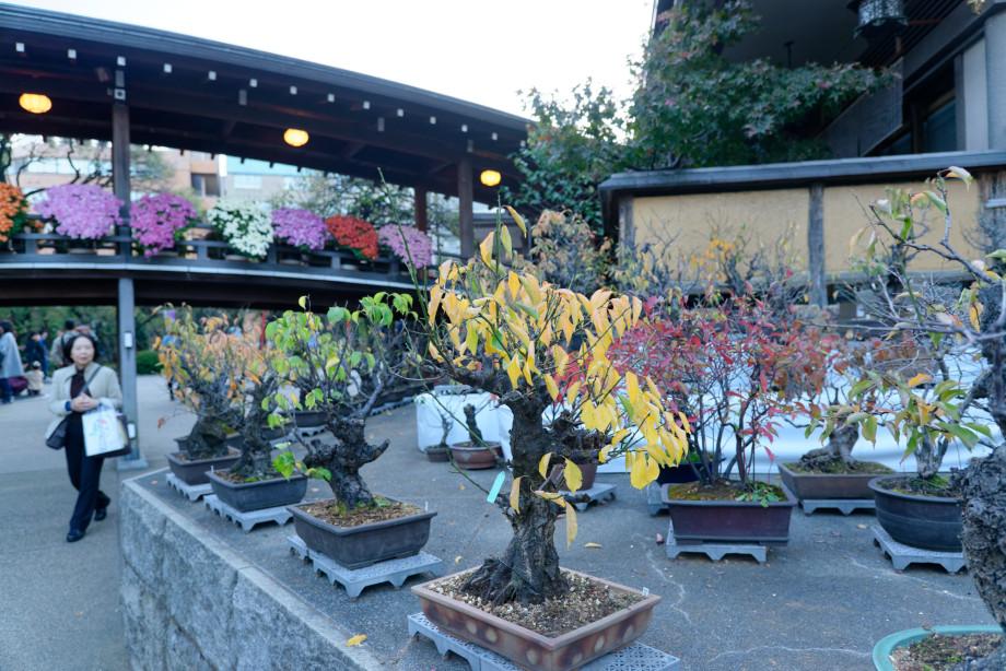 Bonsaïs au temple Yushima Tenman-gu