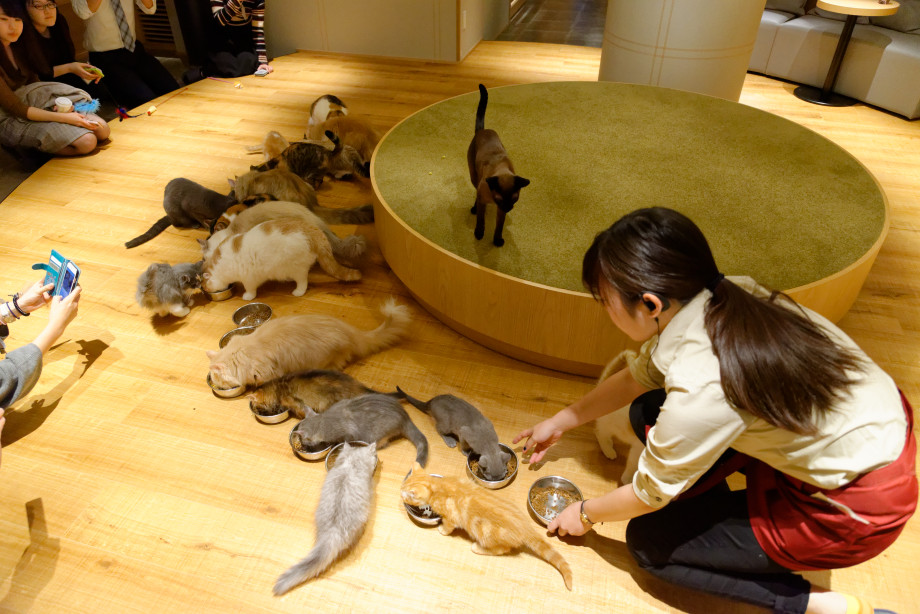 Ensemble des chats du mocha cat café à Tokyo
