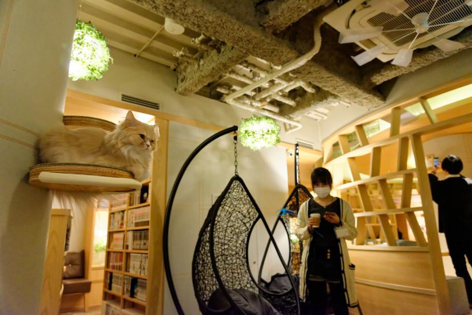 Mocha cat café à Tokyo