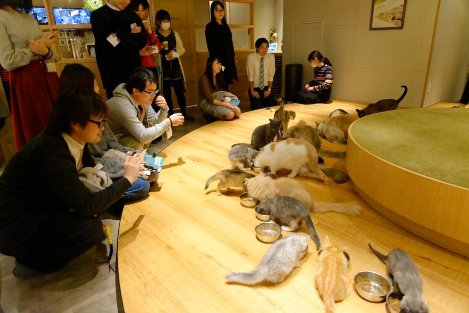 Repas des chats du mocha cat café à Tokyo